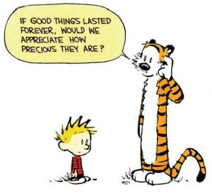 calvin and hobbes.precious